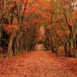 九州の紅葉狩りの名所や穴場まとめ!ライトアップや見頃の時期も