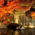 関東の紅葉狩りの名所や穴場まとめ!ライトアップや見頃の時期も紹介