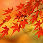中国地方の紅葉狩りの名所や穴場まとめ!ライトアップや見頃の時期もご紹介