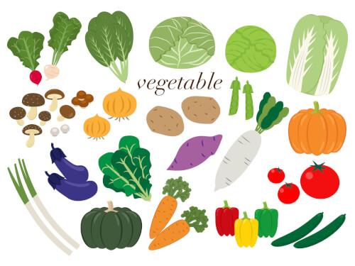 新鮮野菜1